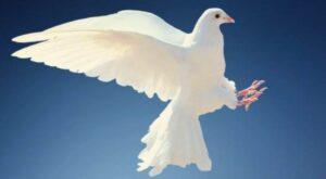 El Espíritu Santo en forma de Paloma