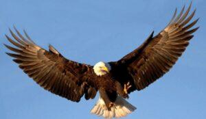 Reflexión del Águila y el Hombre