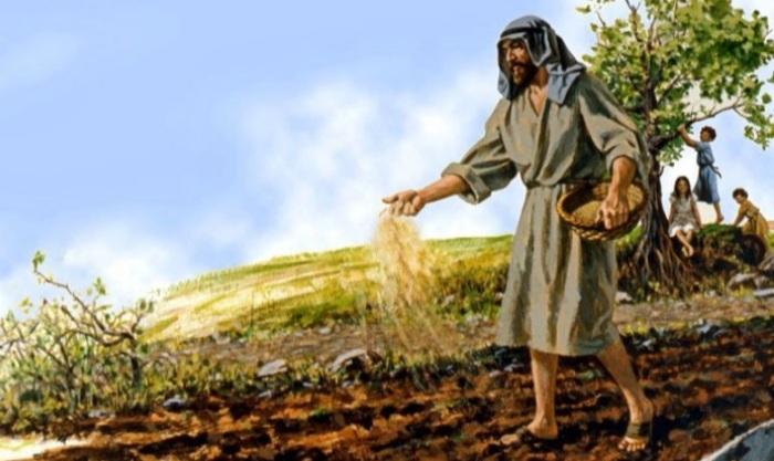 Parábola del Trigo y de la Cizaña